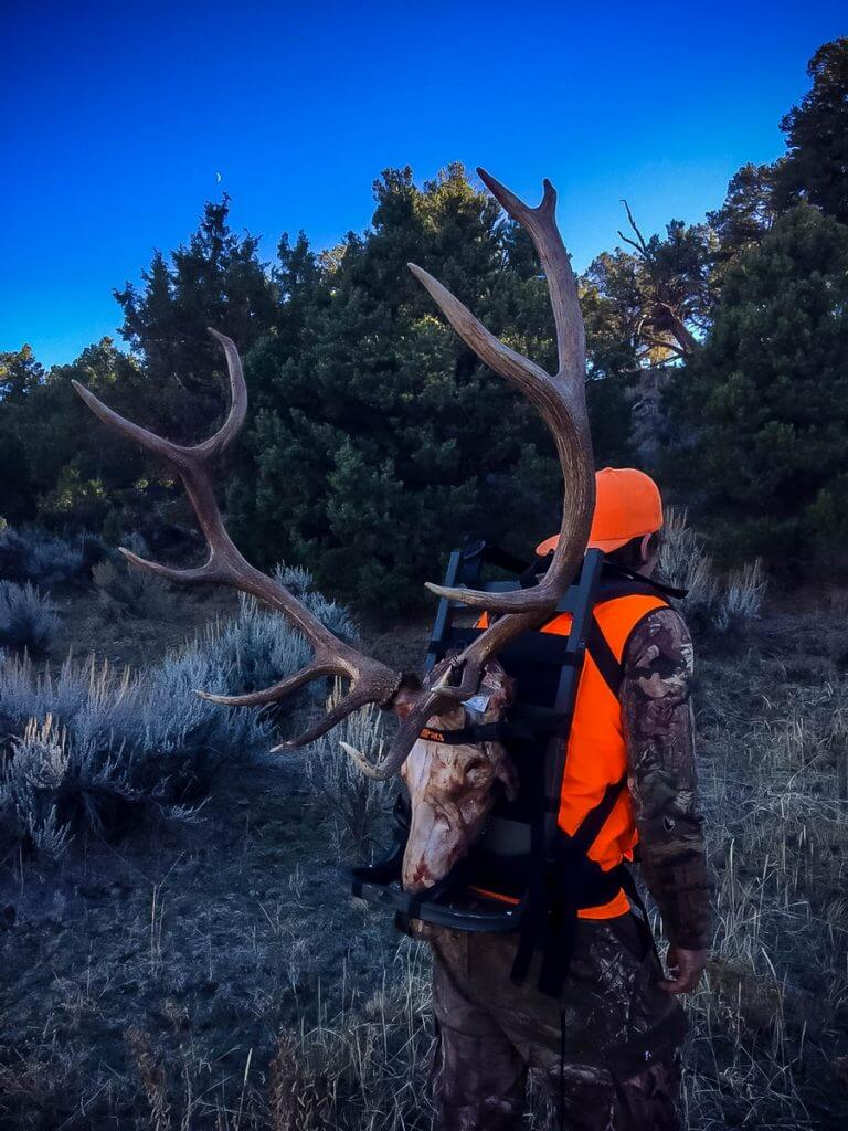 Colorado Elk Hunts - DIY and Guided Elk Hunting - Elk